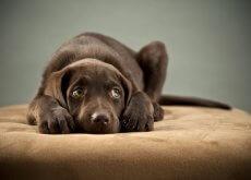 perro-con-miedo-a-la-pirotecnia