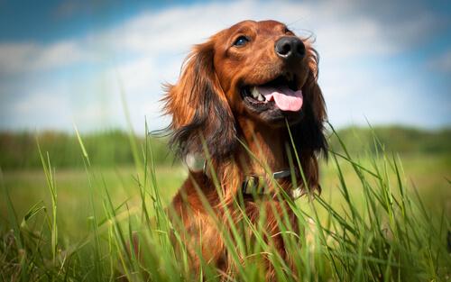 perro-es-feliz