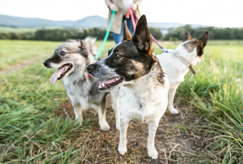 perro-para-detectar-enfermedades