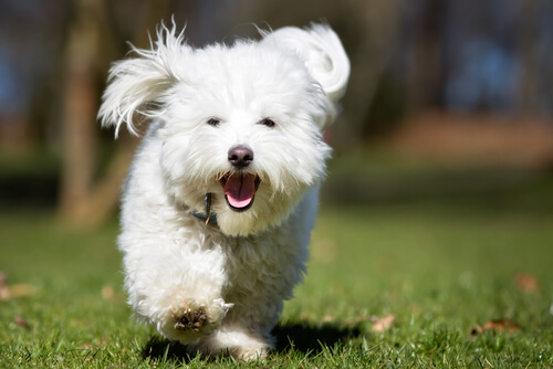 Por qué tu perro corre cuando le das una golosina