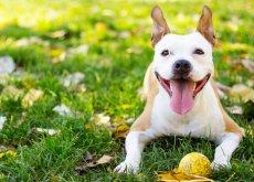 perro-sano-y-feliz