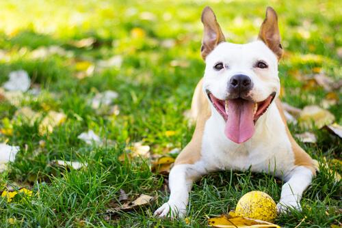Perro sano y feliz