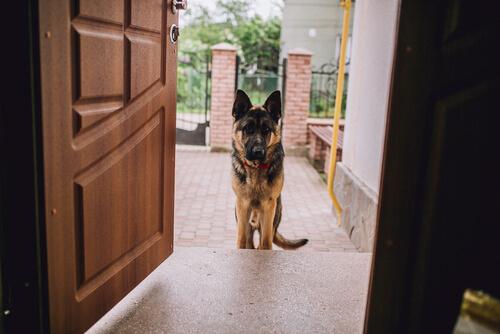 perro-y-las-visitas