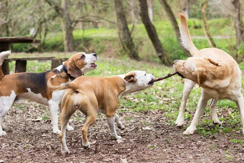 Veterinarios británicos advierten del uso de palos para jugar con perros