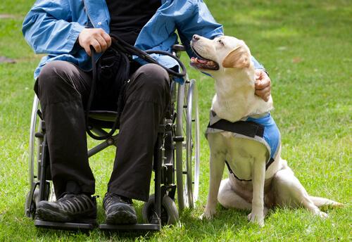Perros que mejoran la vida de muchas personas
