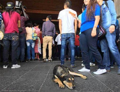 Cientos de perros son abandonados por feligreses en basílica