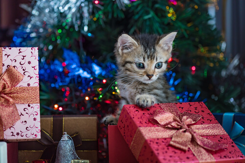 A kitten playing in a pile of Christmas presents.