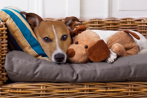 ¿Sabías que nosotros también podemos transmitir enfermedades a nuestras mascotas?