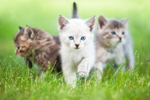 Kittens walking in the grass
