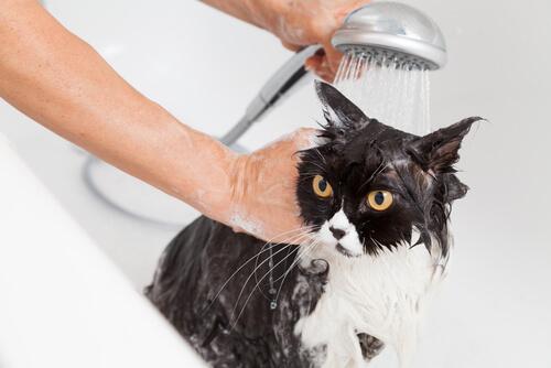Un baño seguro al gato