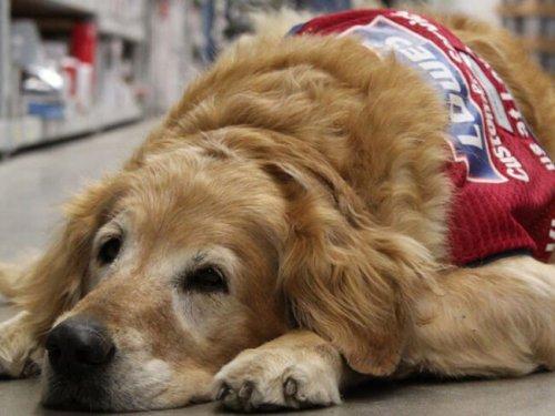 La endoscopia en perros