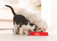 alimentar-de-forma-adecuada-a-las-mascotas