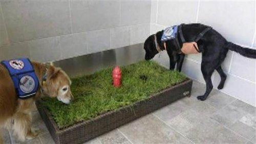 ¿Sabías que existen baños para mascotas en los aeropuertos?