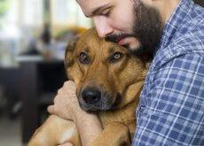 cancer-en-los-perros