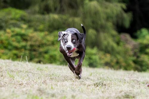 Por fin se prohíben las carreras de perros