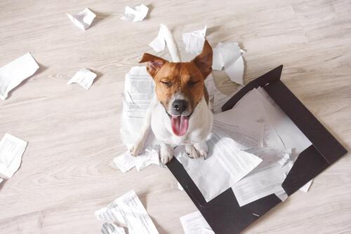 3 consejos para que tu perro no destroce la casa en tu ausencia