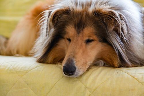 Mejora la convivencia con tu mascota