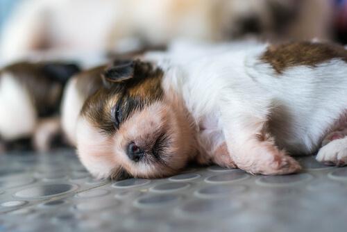 Cachorro en el suelo durmiendo