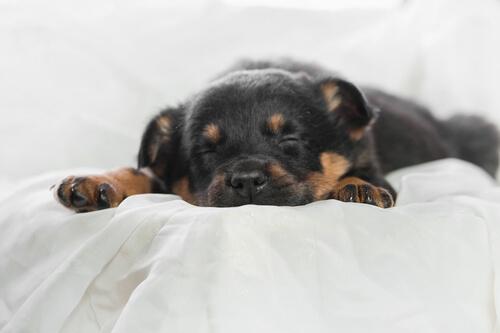 ¿Por qué el descanso y dormir bien es importante para mascotas?