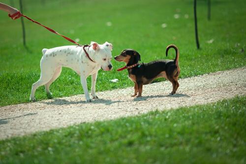 ¿Por qué los perros se huelen?