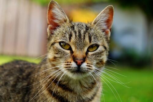 ¿Cuál es la edad humana de tu gato?