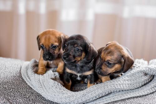 ¿Por qué es importante que los cachorros se relacionen?