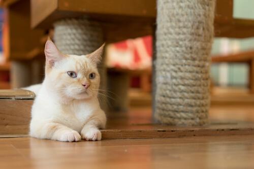 gato-munchkin-2
