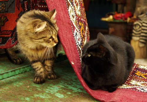 A black cat and a tabby cat.