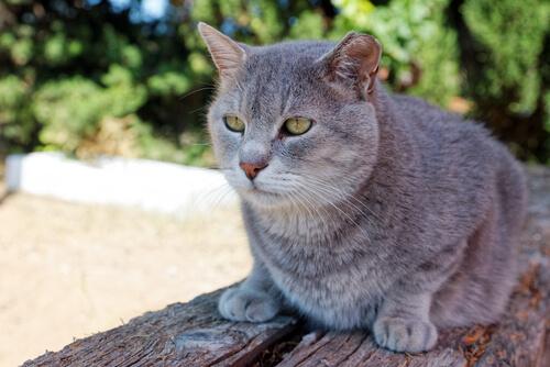 Un estudio confirma que los gatos ancianos no soportan ruidos