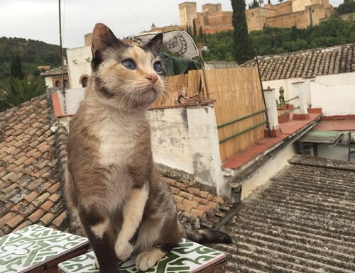 Los gatos de La Alhambra