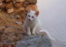 gatos-en-las-diferentes-culturas