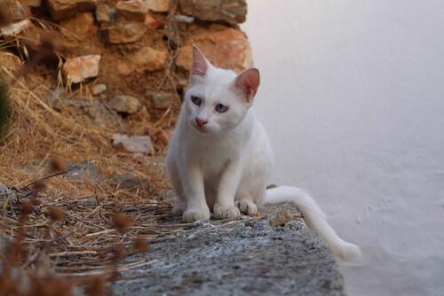 ¿Qué representan los gatos en las diferentes culturas?