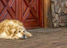 la-mudanza-para-un-perro