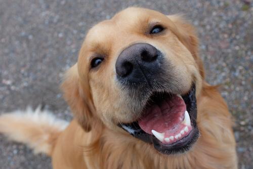 La importancia de los dientes en perros