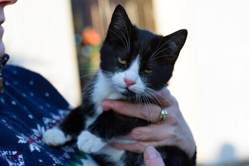 Un estudio de cómo los gatos se comunican con sus dueños