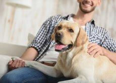 los perros reconocen el tono de voz