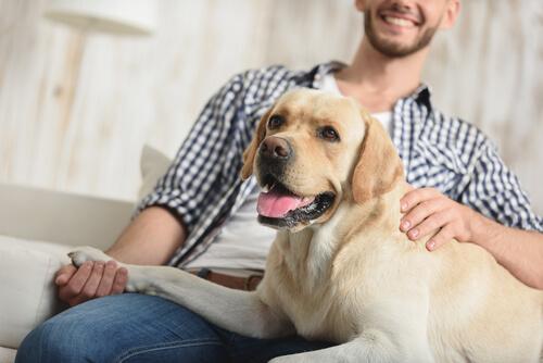 ¿Sabías que los perros notan el tono de voz?