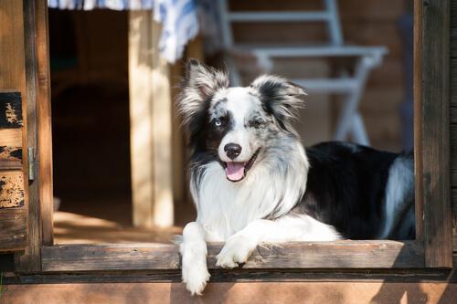 Por qué los perros ven puertas invisibles