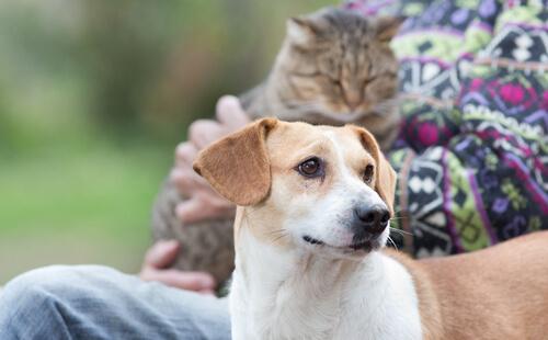 mascotas-y-las-personas-mayores