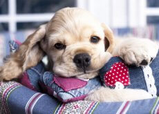 miel-para-tu-perro