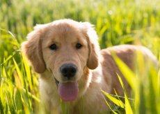 nuestros-amigos-los-perros