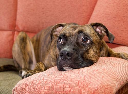Perros con miedo a otros perros: ¿Qué hacer?