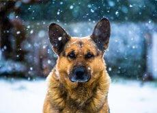 perro-en-invierno