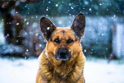 ¿Cómo entretener a un perro en invierno?