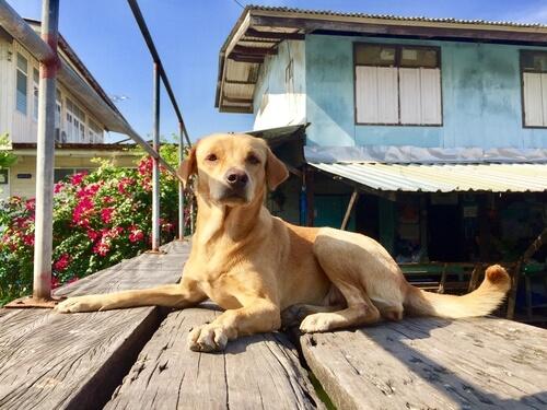 Normas a tener en cuenta sobre nuestra mascota en una comunidad de vecinos