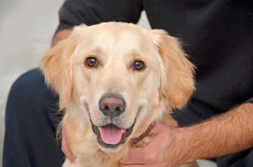 Causas De La Decoloración De Nariz En El Perro Mis Animales