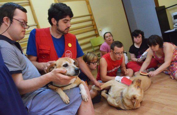 terapia con perros en la asociación de sindrome de down.