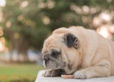 perros-comen-menos-en-verano
