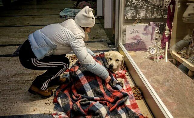 perros-durmiendo-en-centro-comercial-2