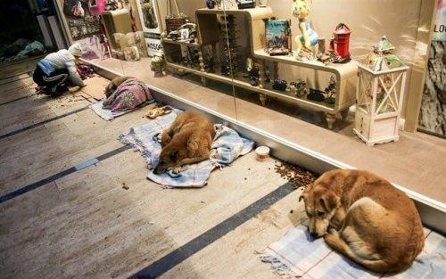 Dejan dormir a perros callejeros en un centro comercial